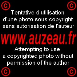 Ramassage rail Bonnieres 27-08-2009 008